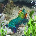 模拟皮皮虾传奇